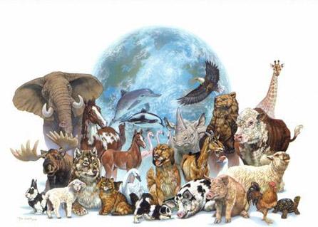 especies animales